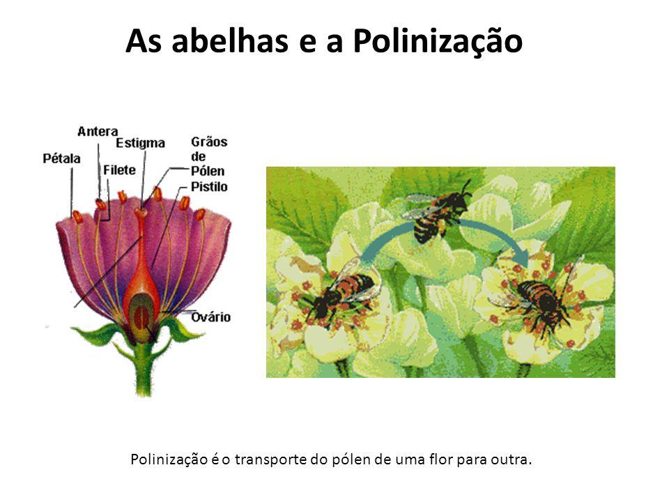 Polinização é o transporte do pólen de uma flor para outra.