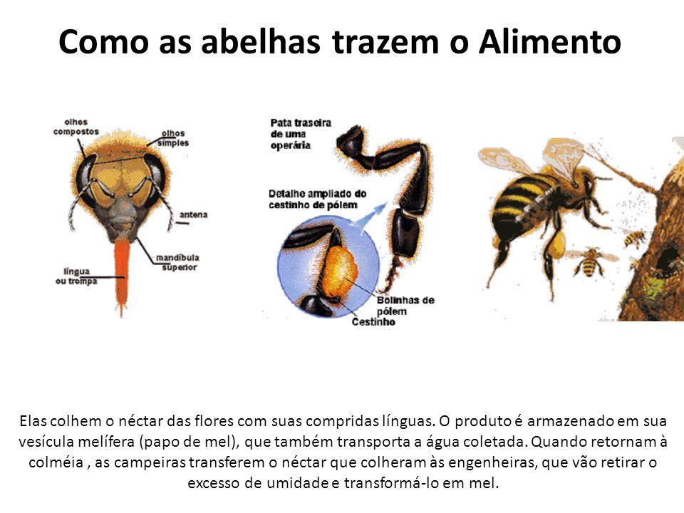 Como as abelhas trazem o Alimento
