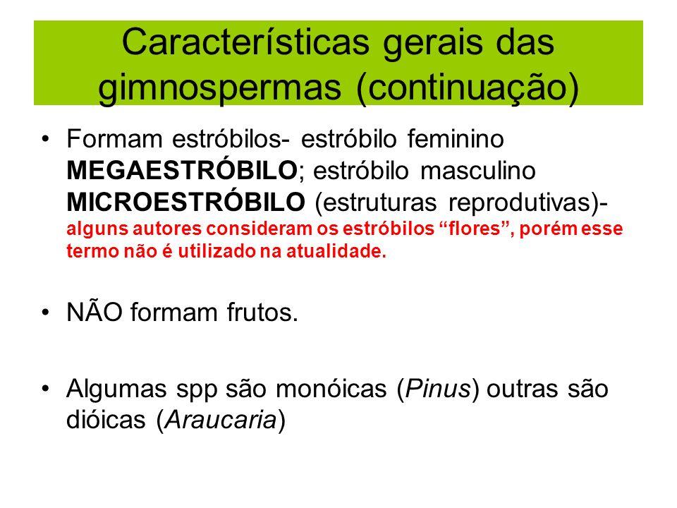 Características gerais das gimnospermas (continuação)