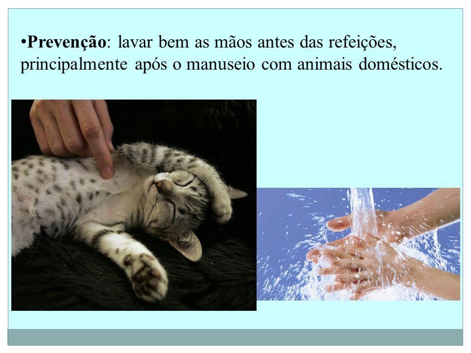 Prevenção: lavar bem as mãos antes das refeições, principalmente após o manuseio com animais domésticos.
