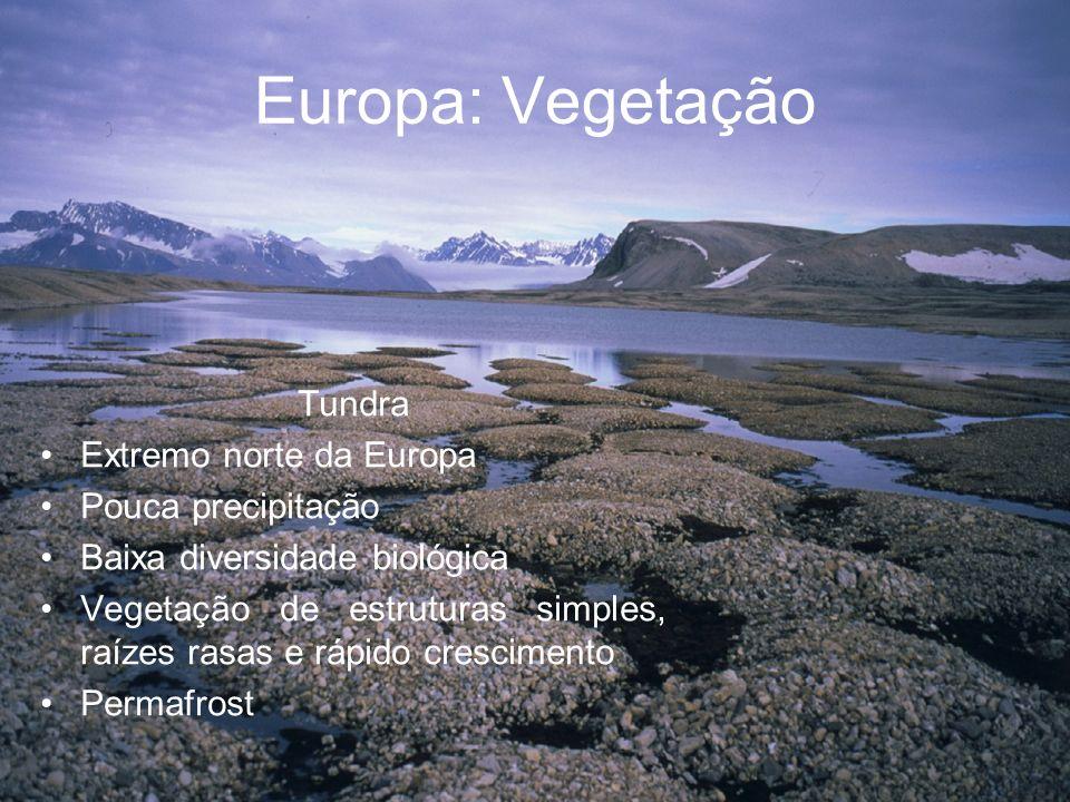 Europa: Vegetação Tundra Extremo norte da Europa Pouca precipitação