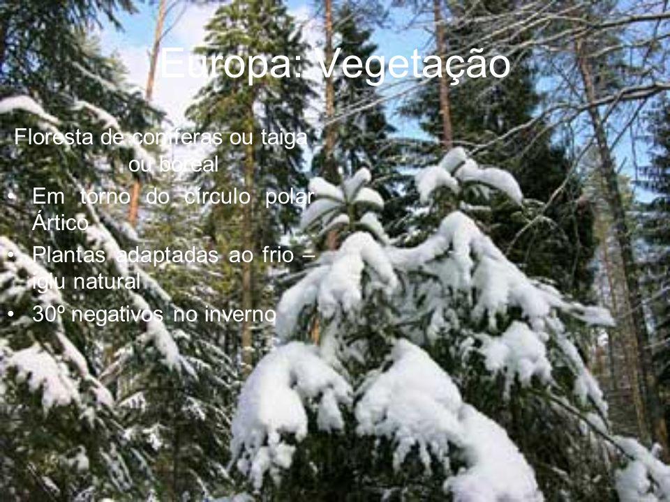 Floresta de coníferas ou taiga ou boreal