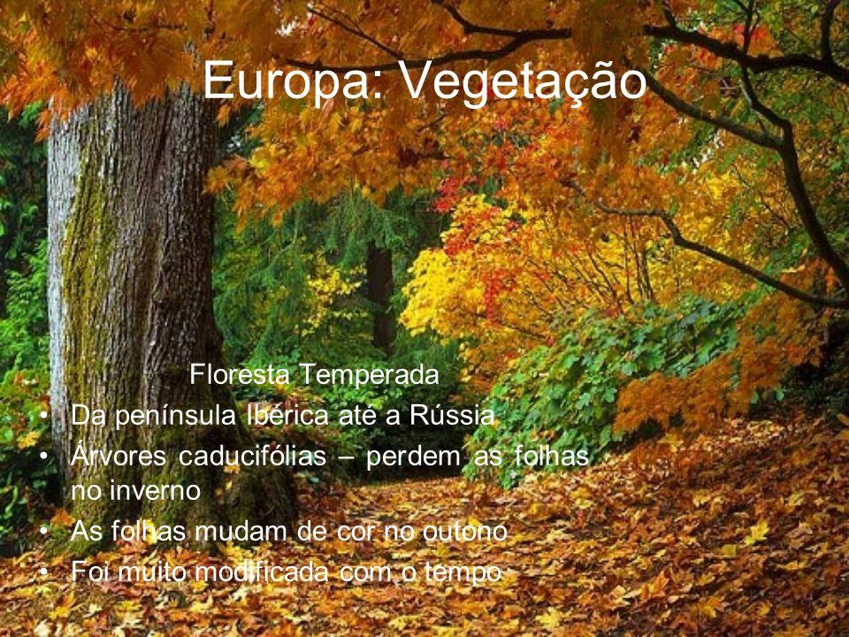 Europa: Vegetação Floresta Temperada Da península Ibérica até a Rússia