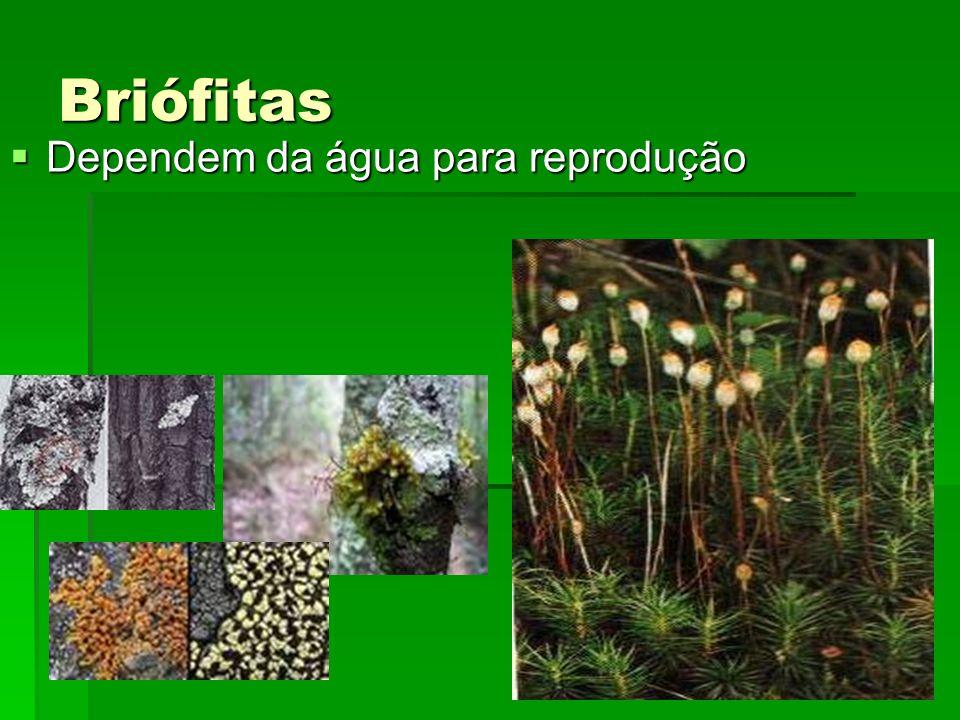 Briófitas Dependem da água para reprodução