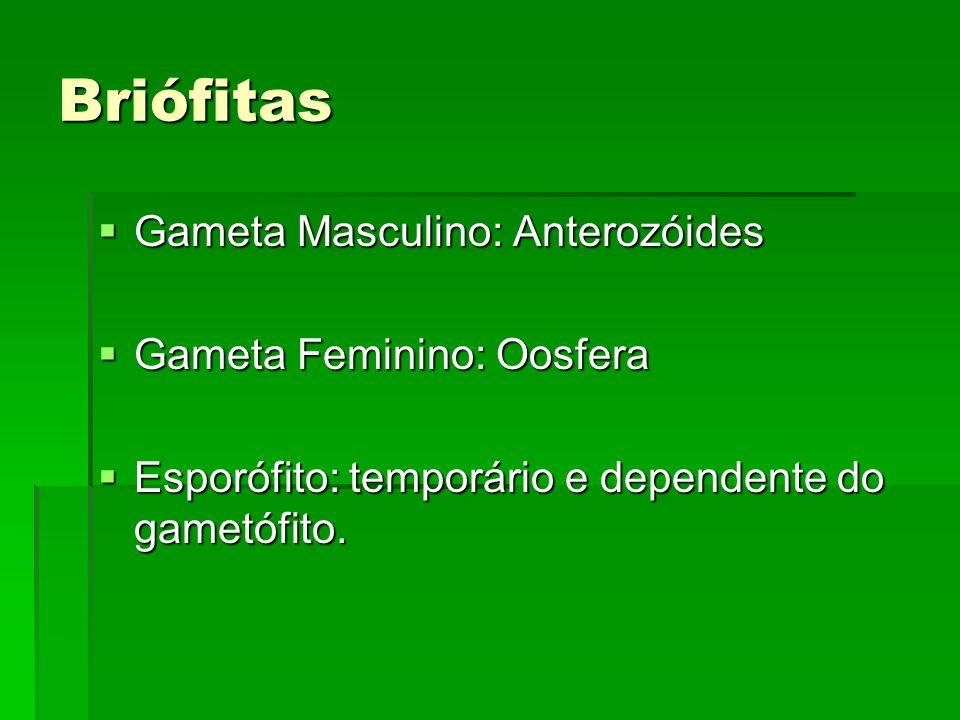Briófitas Gameta Masculino: Anterozóides Gameta Feminino: Oosfera