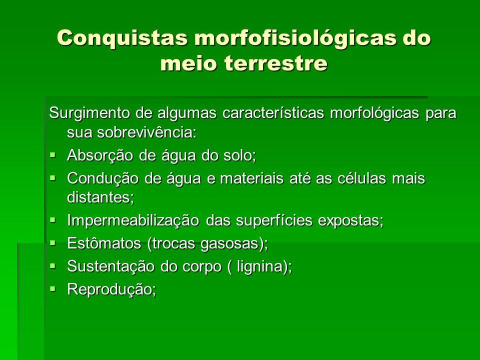 Conquistas morfofisiológicas do meio terrestre