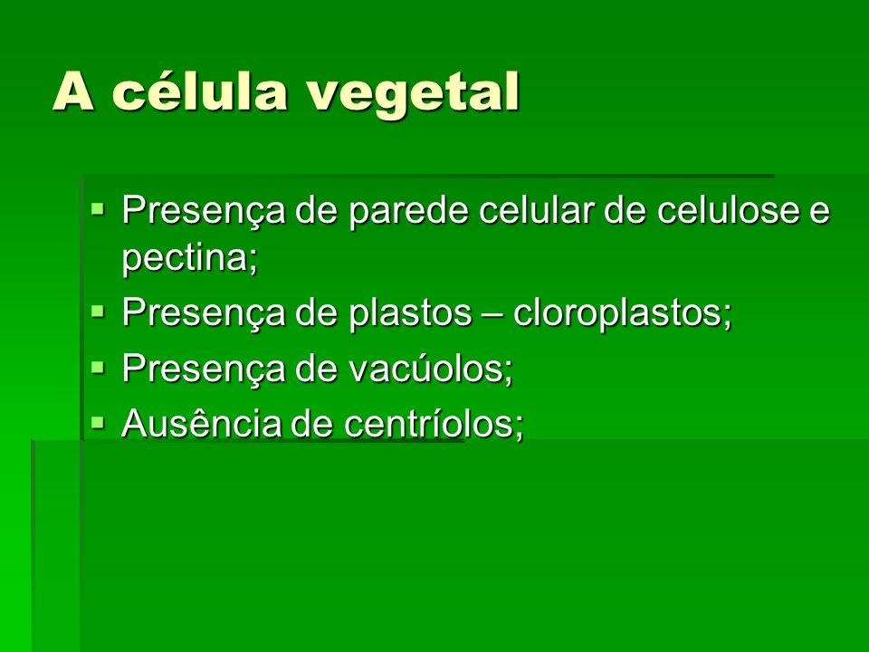 A célula vegetal Presença de parede celular de celulose e pectina;