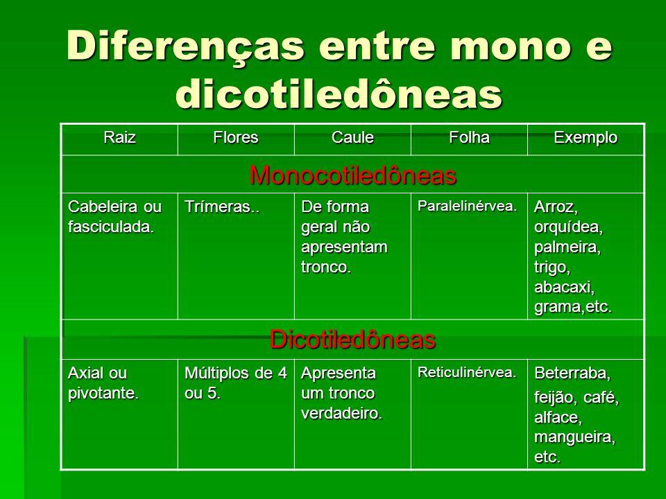 Diferenças entre mono e dicotiledôneas