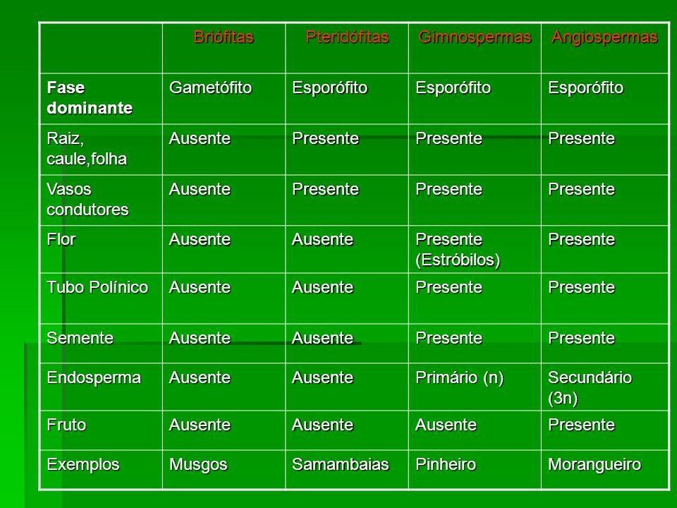 Briófitas Pteridófitas. Gimnospermas. Angiospermas. Fase dominante. Gametófito. Esporófito. Raiz, caule,folha.