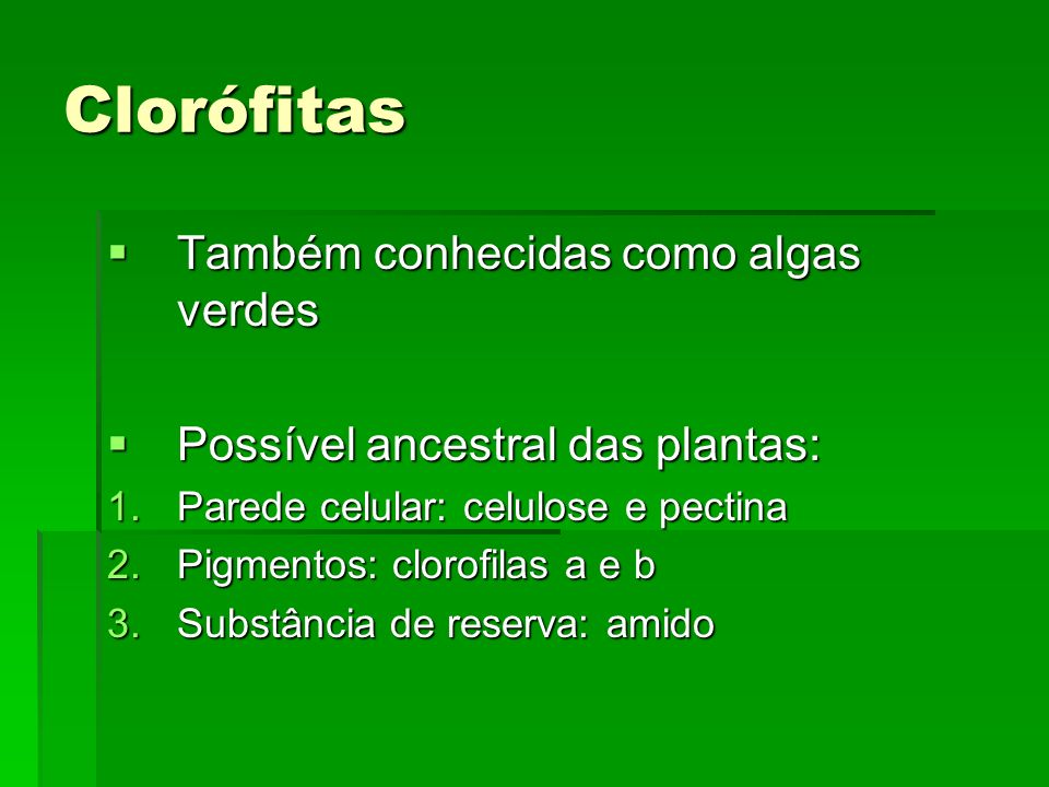 Clorófitas Também conhecidas como algas verdes