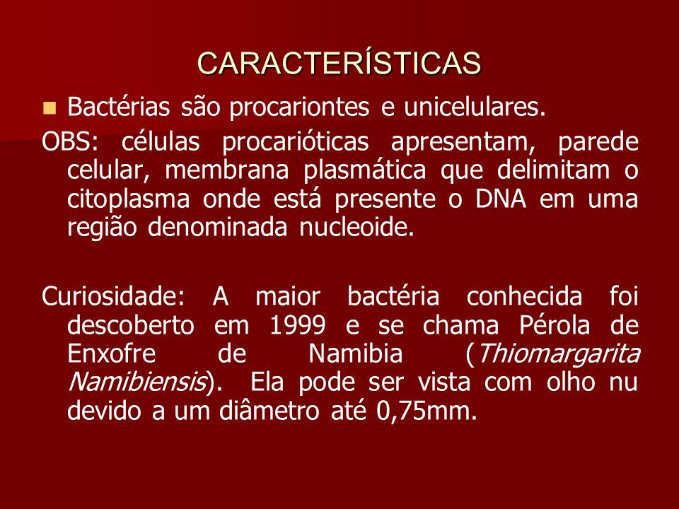 CARACTERÍSTICAS Bactérias são procariontes e unicelulares.
