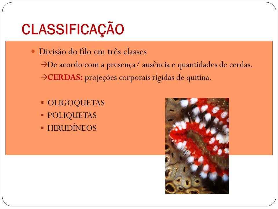 CLASSIFICAÇÃO Divisão do filo em três classes