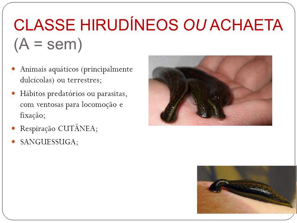 CLASSE HIRUDÍNEOS OU ACHAETA (A = sem)