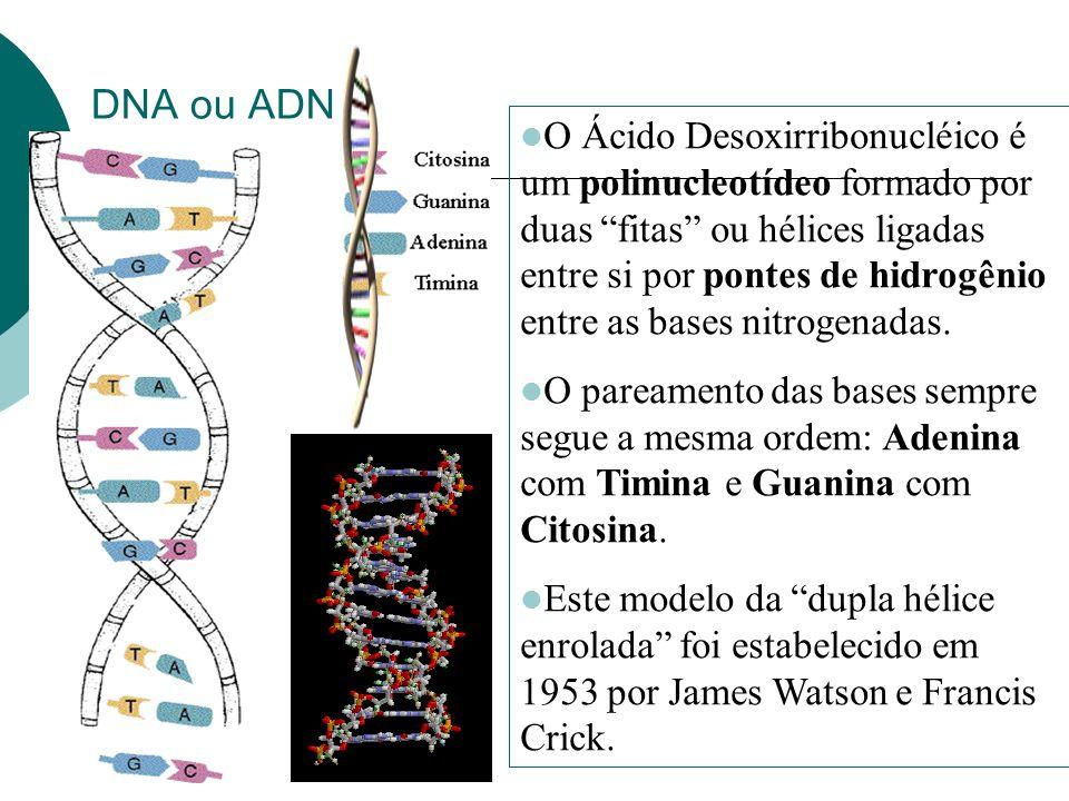 DNA ou ADN