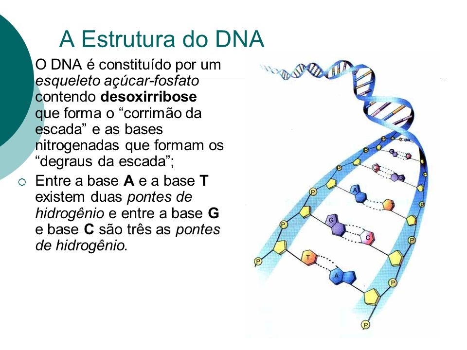A Estrutura do DNA