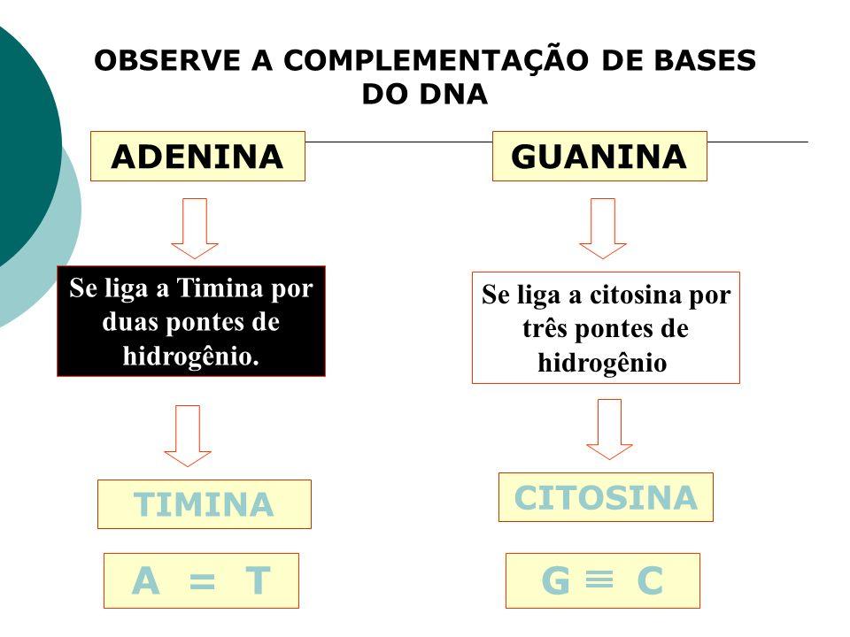 A = T G C ADENINA GUANINA CITOSINA TIMINA