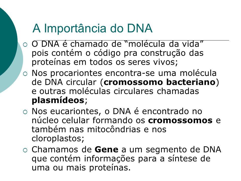 A Importância do DNA O DNA é chamado de molécula da vida pois contém o código pra construção das proteínas em todos os seres vivos;