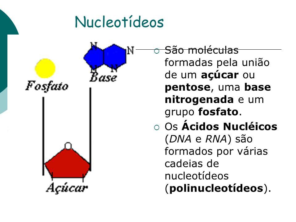 Nucleotídeos São moléculas formadas pela união de um açúcar ou pentose, uma base nitrogenada e um grupo fosfato.
