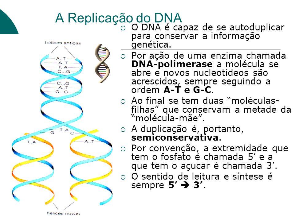 A Replicação do DNA O DNA é capaz de se autoduplicar para conservar a informação genética.