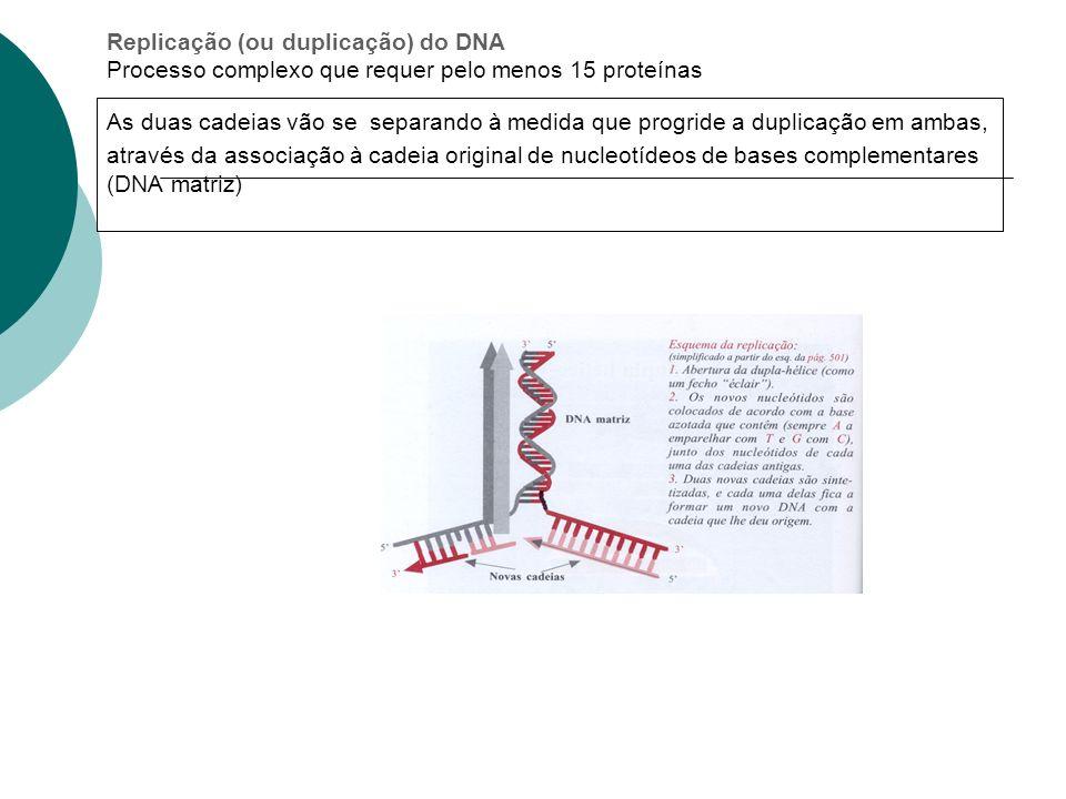 Replicação (ou duplicação) do DNA Processo complexo que requer pelo menos 15 proteínas As duas cadeias vão se separando à medida que progride a duplicação em ambas, através da associação à cadeia original de nucleotídeos de bases complementares (DNA matriz)