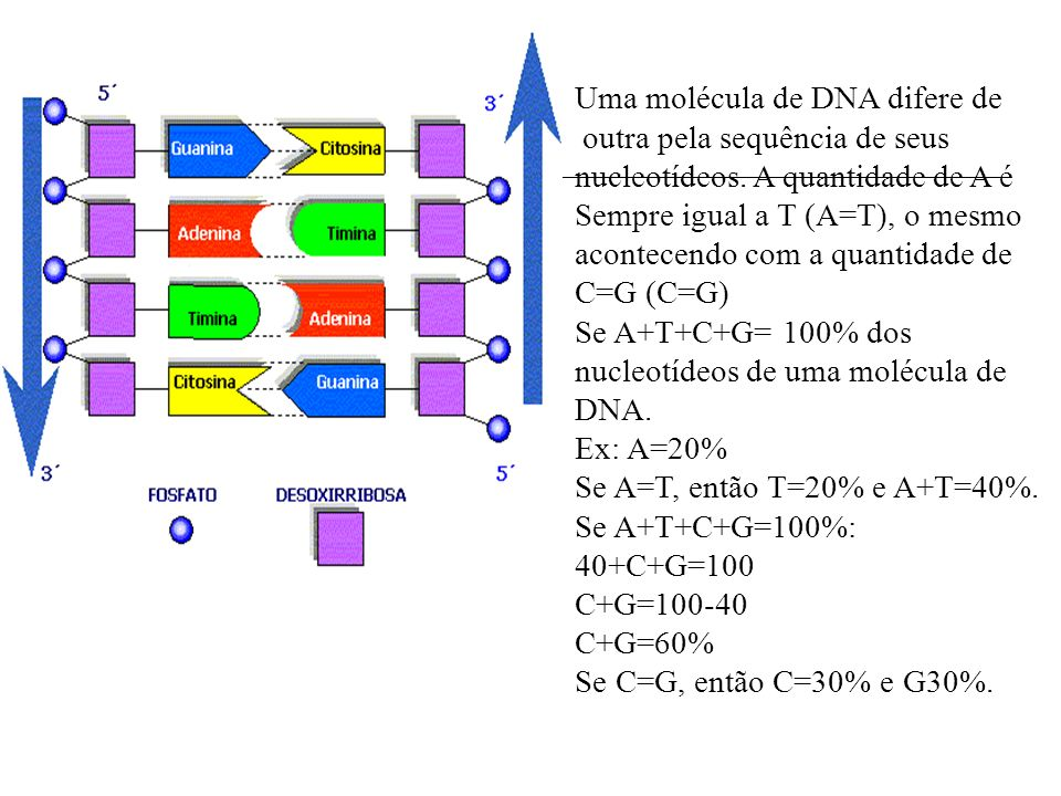 Uma molécula de DNA difere de