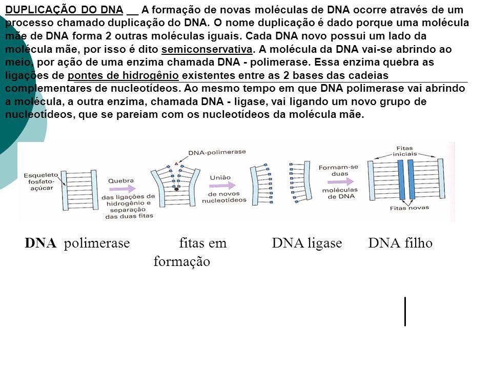 DNA polimerase fitas em DNA ligase DNA filho formação