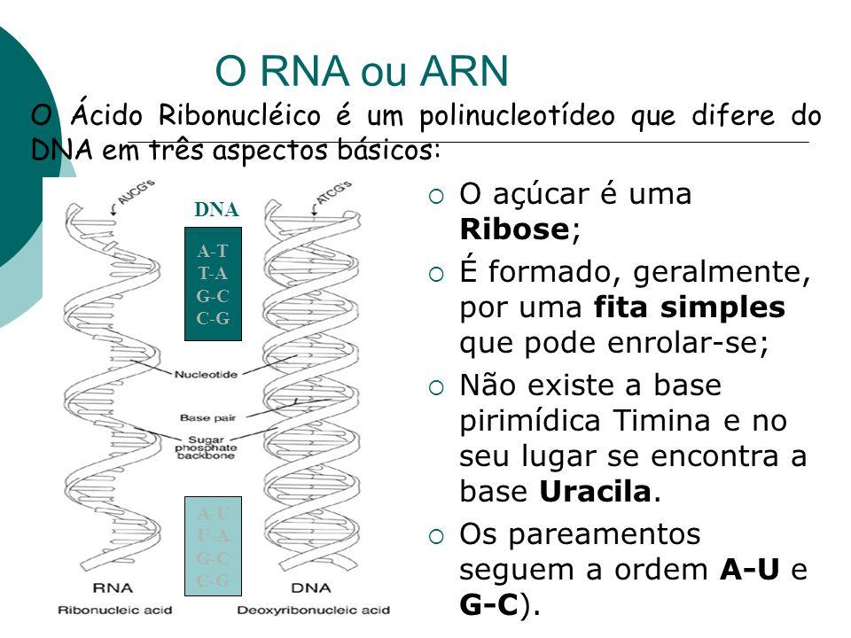 O RNA ou ARN O açúcar é uma Ribose;