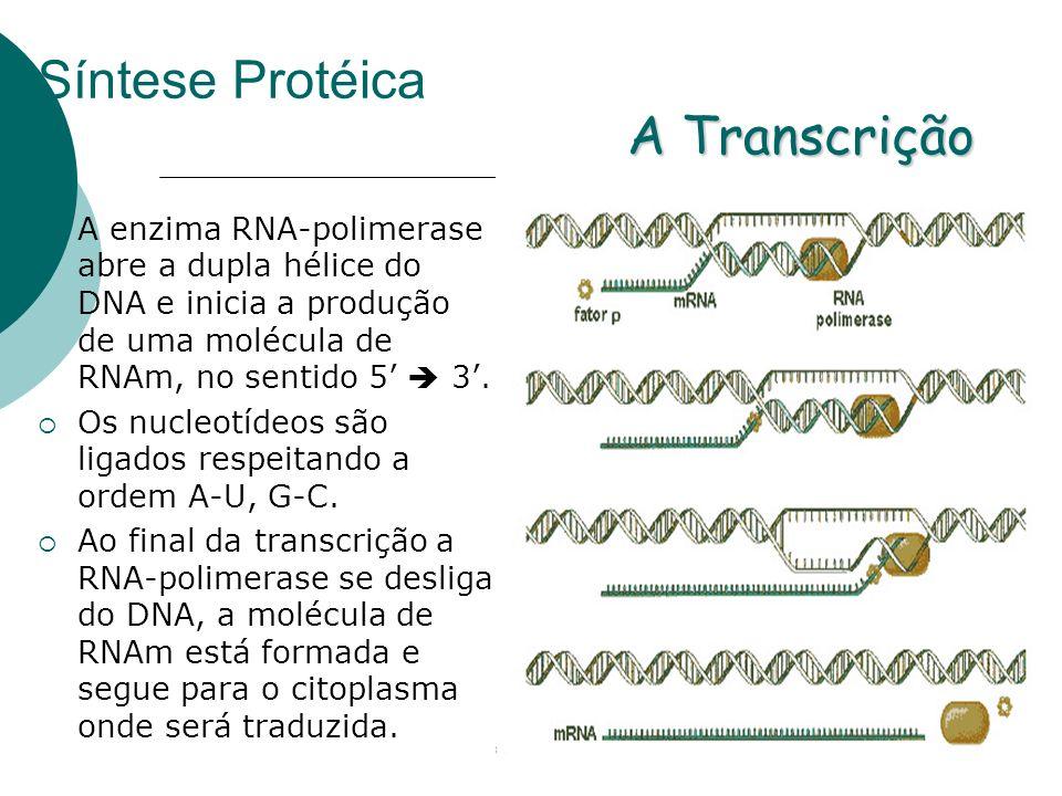 Síntese Protéica A Transcrição