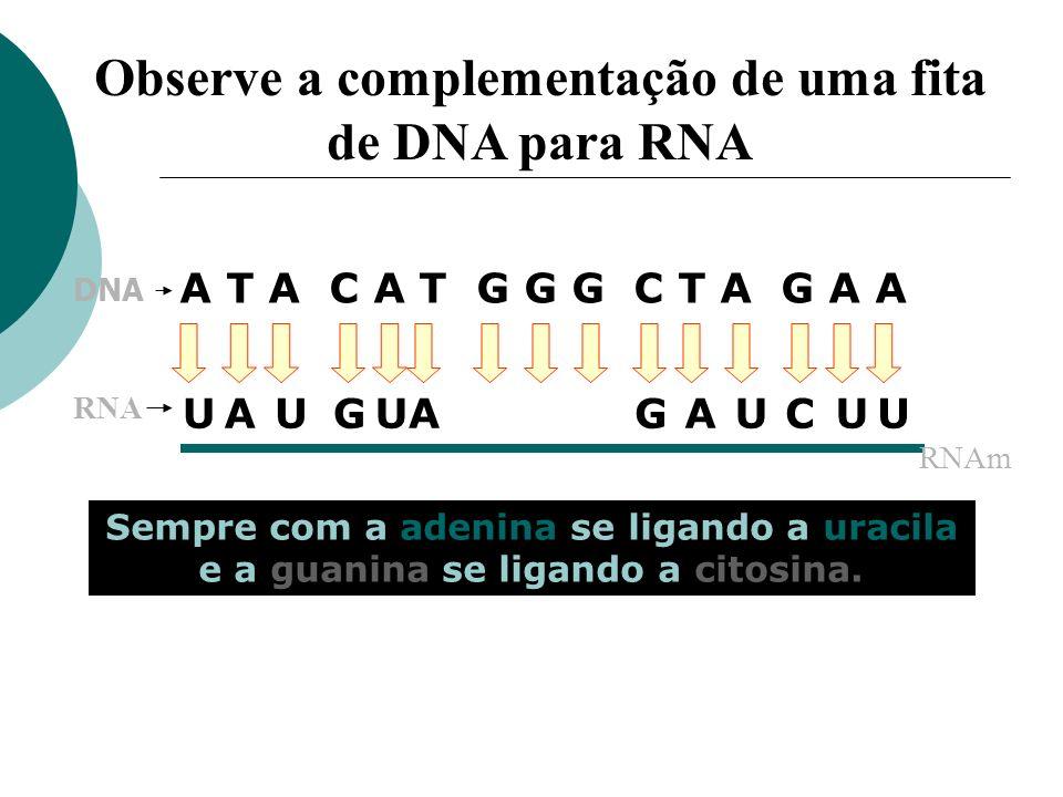 Observe a complementação de uma fita de DNA para RNA
