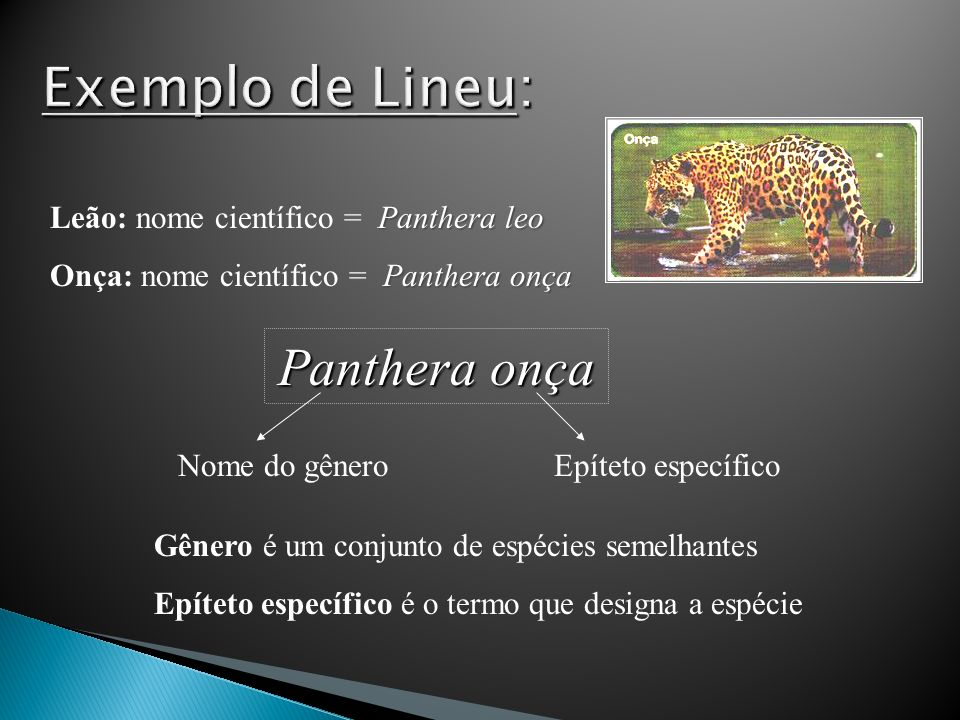 Exemplo de Lineu: Panthera onça Leão: nome científico = Panthera leo