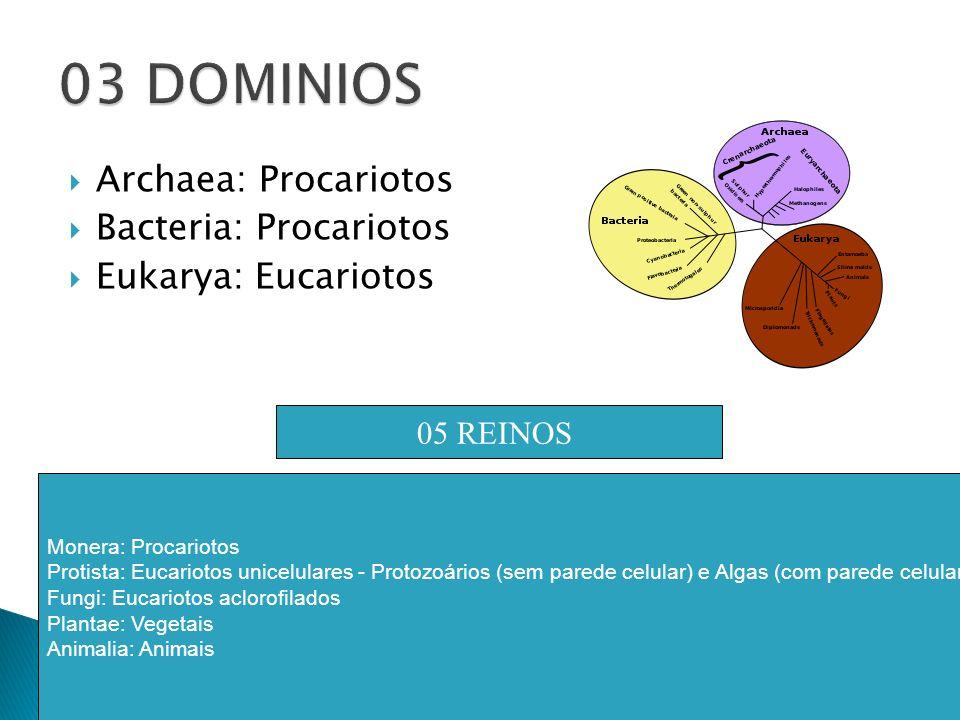 03 DOMINIOS Archaea: Procariotos Bacteria: Procariotos