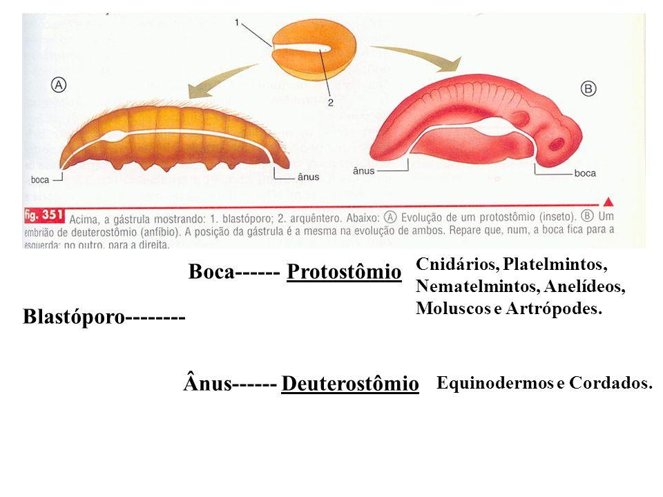 Boca------ Protostômio Blastóporo-------- Ânus------ Deuterostômio