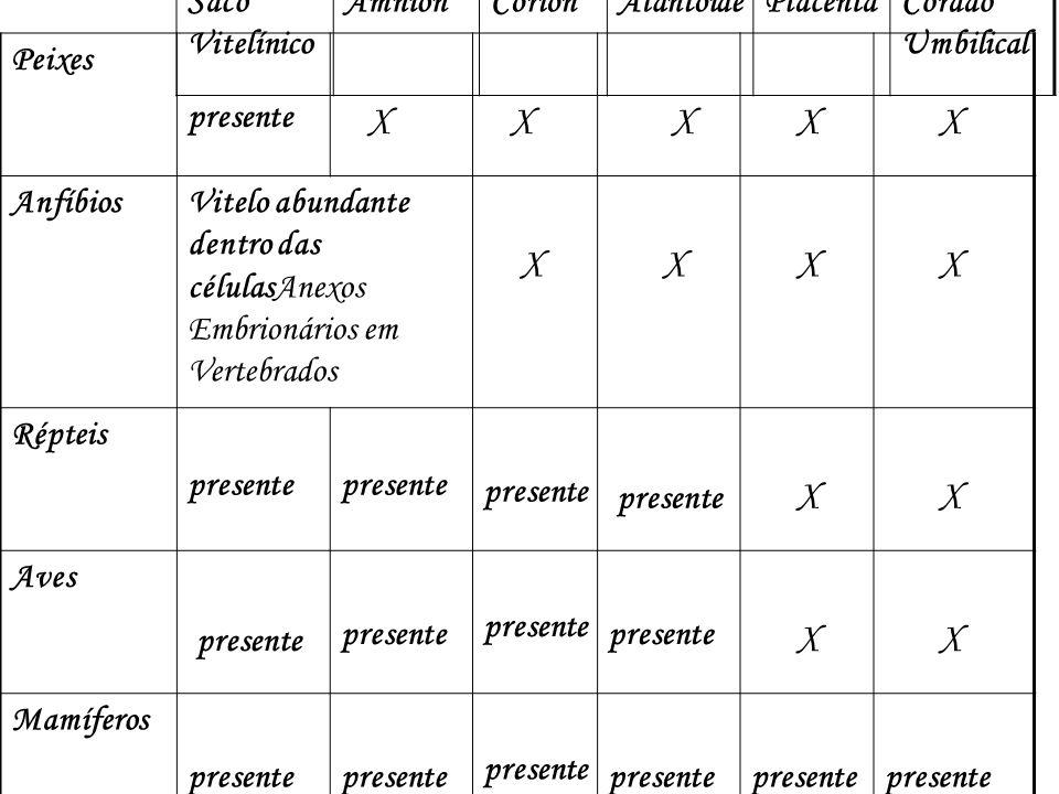 X Saco Vitelínico Âmnion Córion Alantóide Placenta Cordão Umbilical