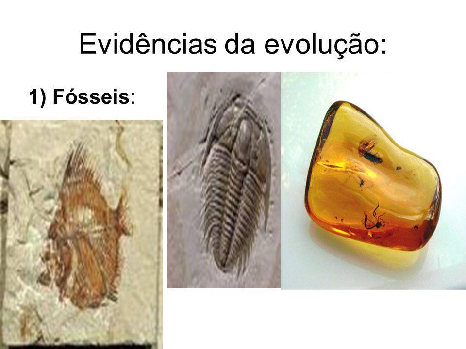 Evidências da evolução: