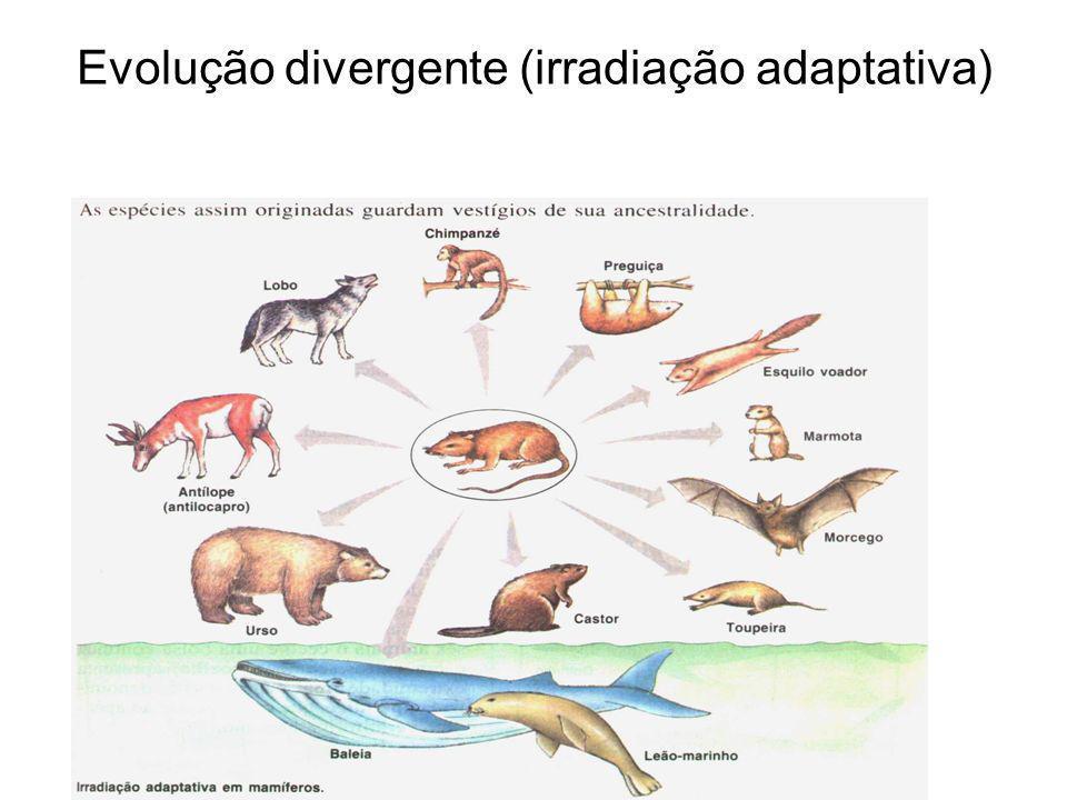 Evolução divergente (irradiação adaptativa)