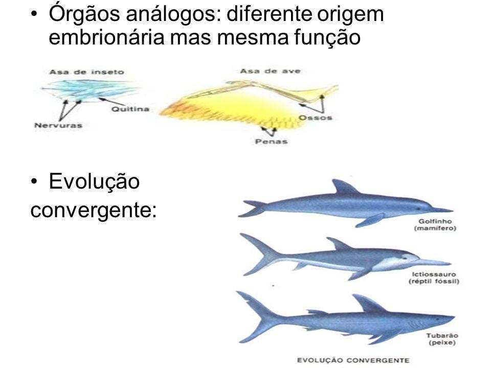 Órgãos análogos: diferente origem embrionária mas mesma função