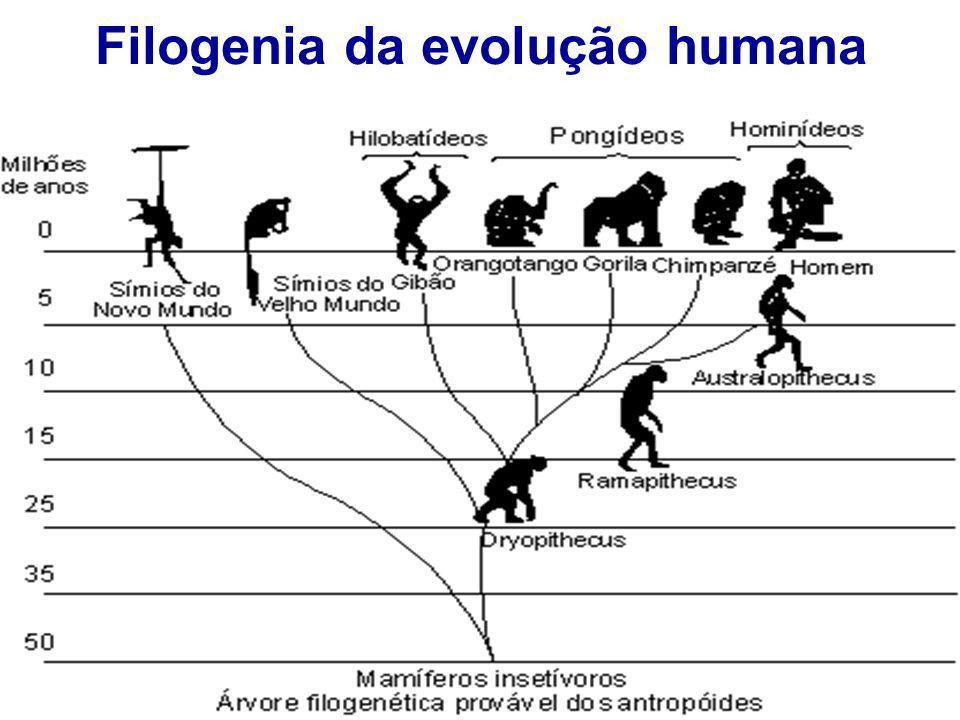 Filogenia da evolução humana