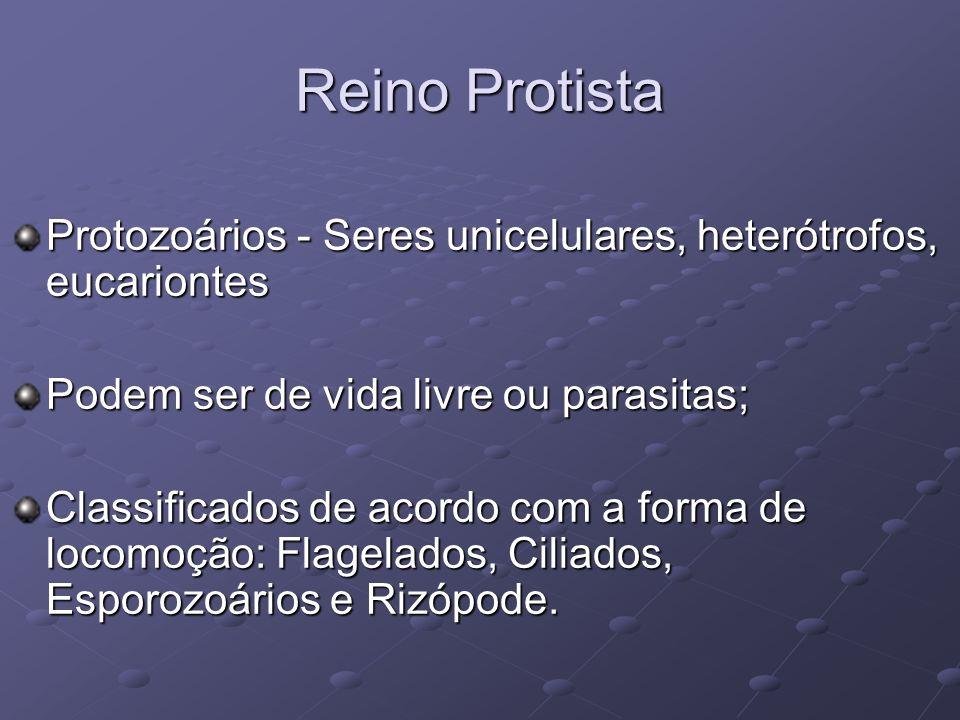 Reino Protista Protozoários - Seres unicelulares, heterótrofos, eucariontes. Podem ser de vida livre ou parasitas;