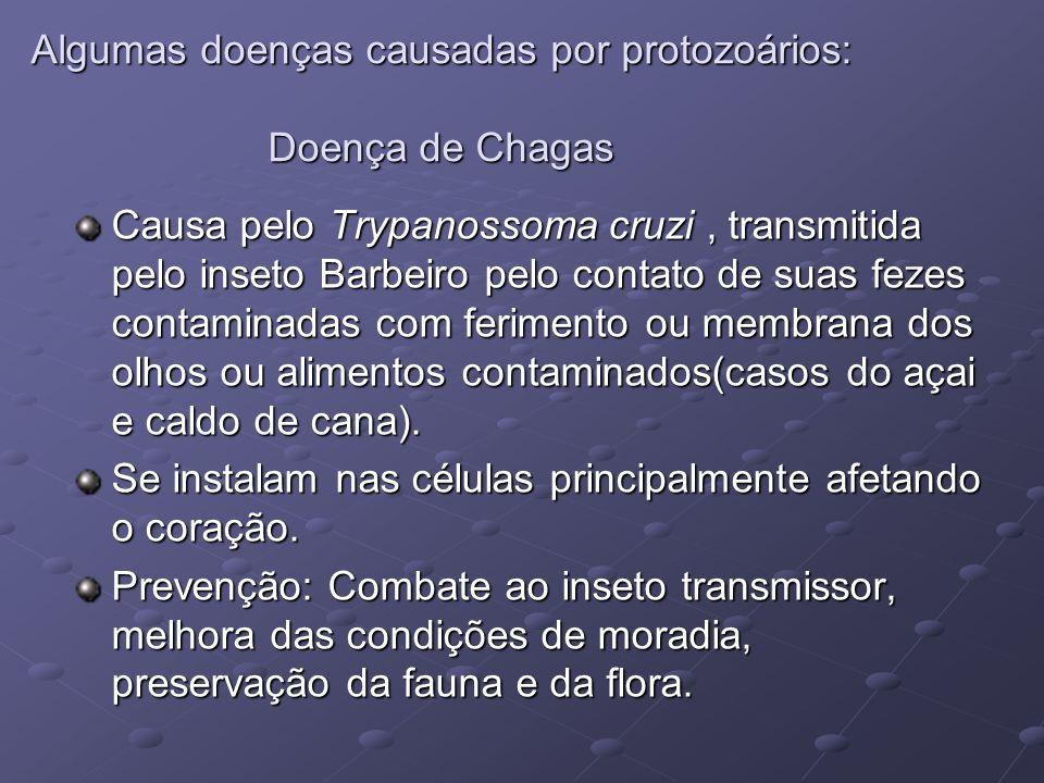 Algumas doenças causadas por protozoários: Doença de Chagas