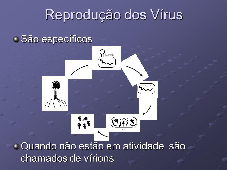 Reprodução dos Vírus São específicos