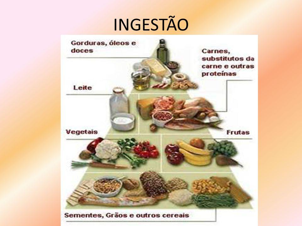 INGESTÃO