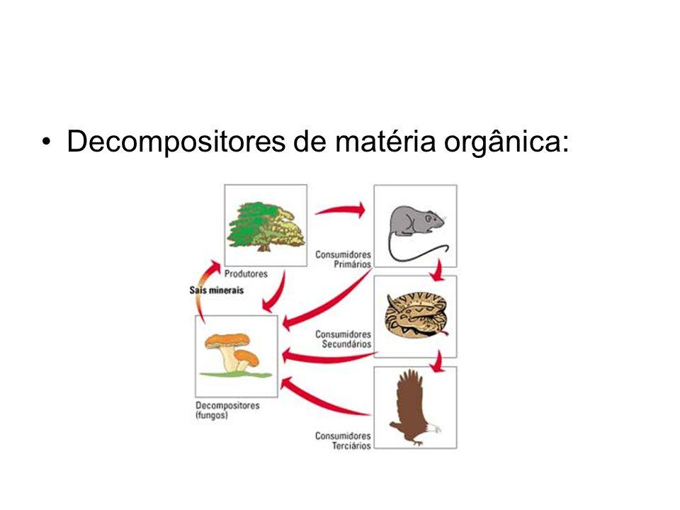 Decompositores de matéria orgânica: