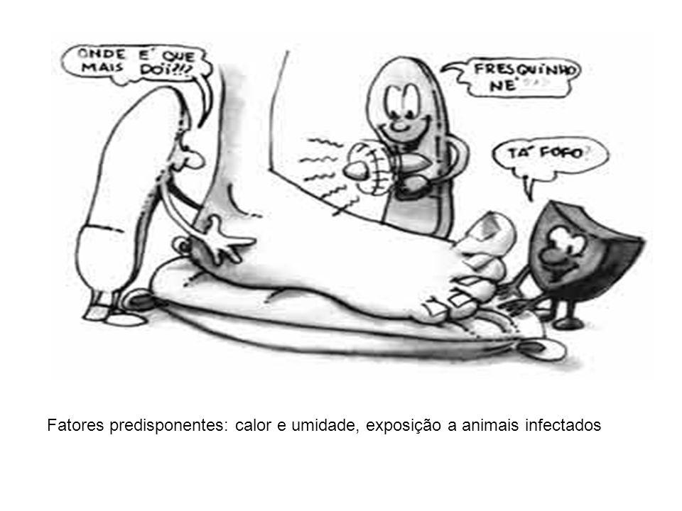 Fatores predisponentes: calor e umidade, exposição a animais infectados