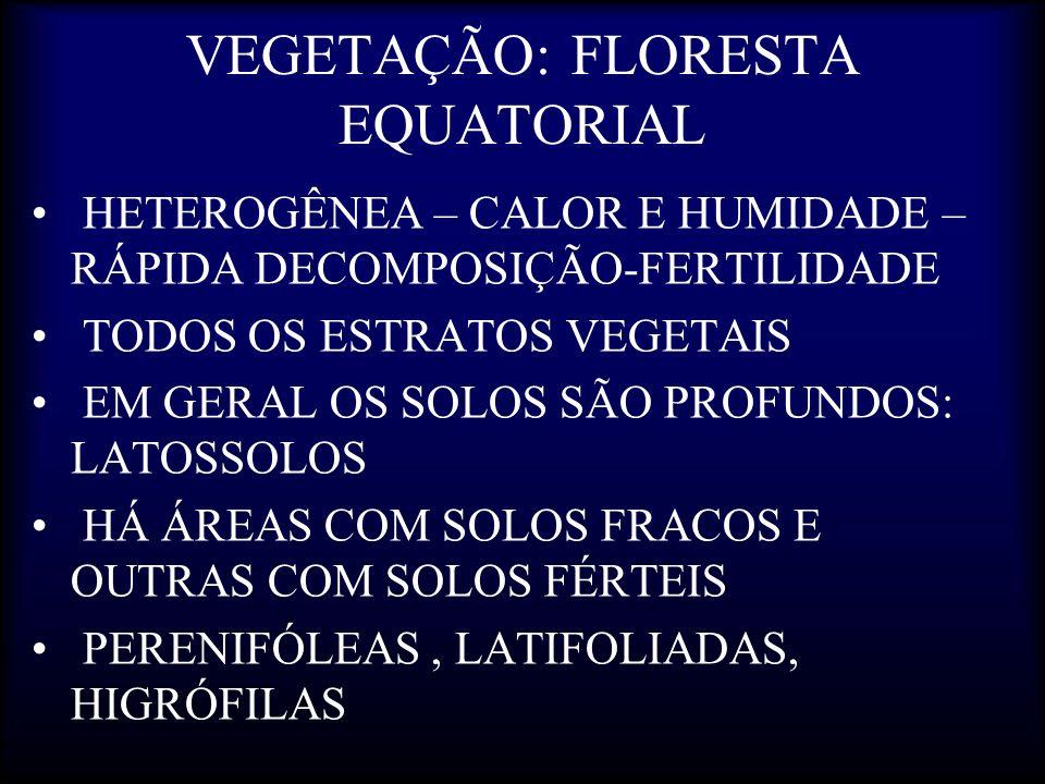 VEGETAÇÃO: FLORESTA EQUATORIAL