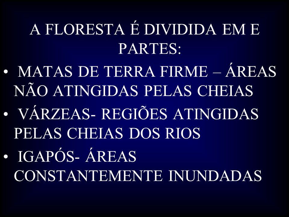 A FLORESTA É DIVIDIDA EM E PARTES: