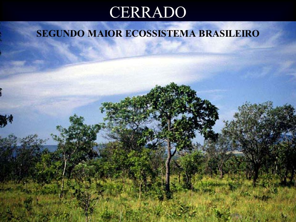 SEGUNDO MAIOR ECOSSISTEMA BRASILEIRO