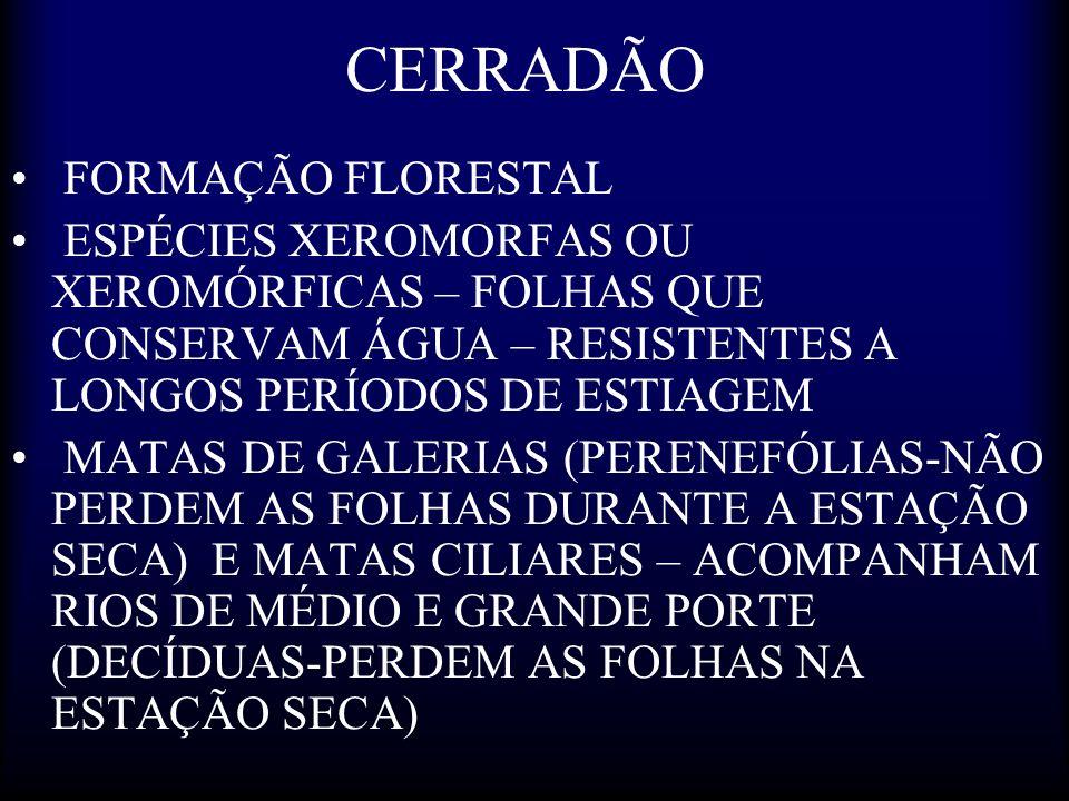 CERRADÃO FORMAÇÃO FLORESTAL