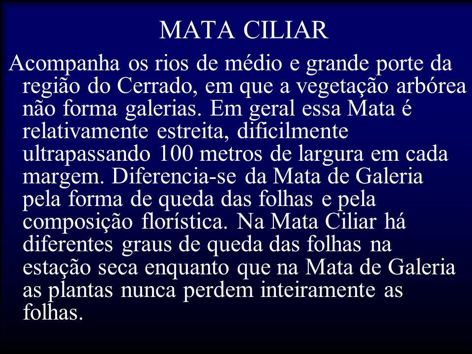 MATA CILIAR