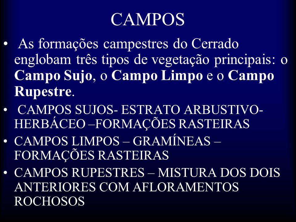 CAMPOS As formações campestres do Cerrado englobam três tipos de vegetação principais: o Campo Sujo, o Campo Limpo e o Campo Rupestre.