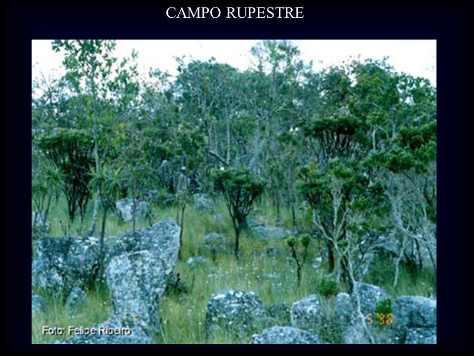 CAMPO RUPESTRE